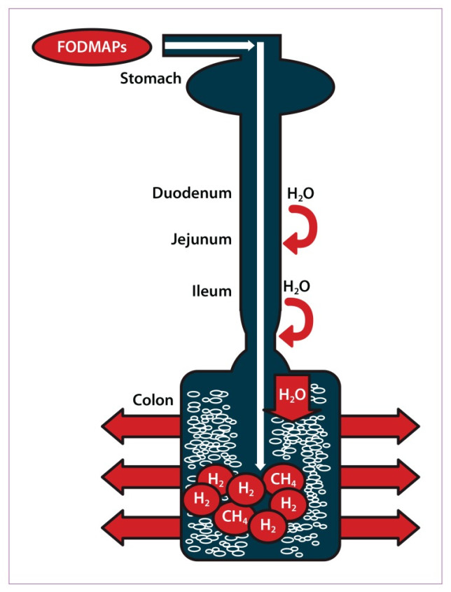 Proces fermentacji FODMAPs